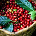 Thành phố cà phê, chuyển phát nhanh Hồ Chí Minh Buôn Ma Thuột uy tín, giá rẻ