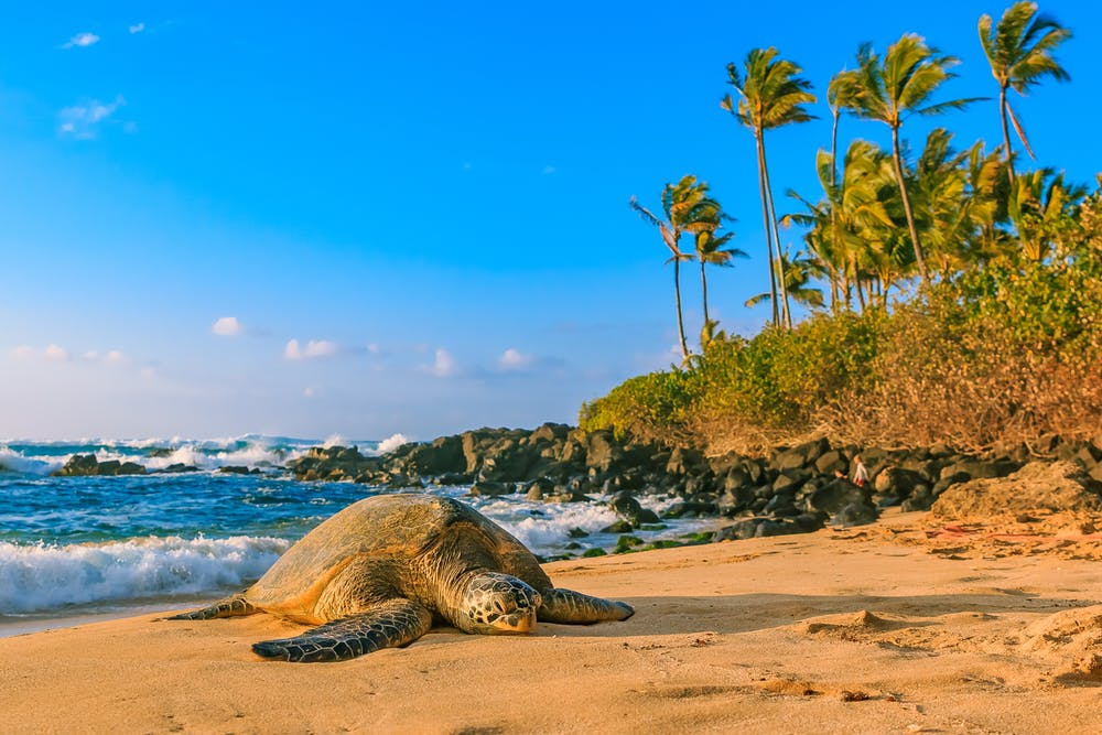 Dịch vụ vận chuyển đi Hawaii chuyên nghiệp